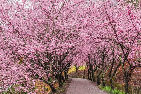 Japonské svátky jara