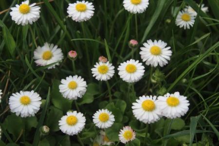 Barevný trávník